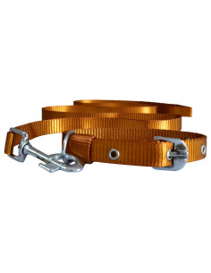 Pawzone Smooth & Sturdy Golden Collar with Leash set