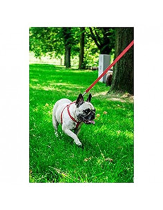 Pawzone Puppy & Kitten Red Body Harness With Leash - 1/2 Inch