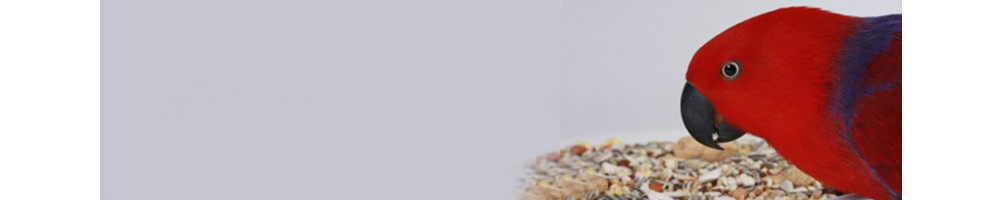 Buy Best Bird Food Online at best prices in India