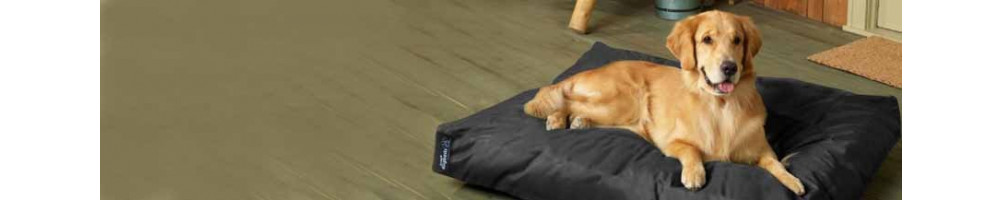 Buy Dog Flat Beds Online India - Get Upto 50% off on Dog beds